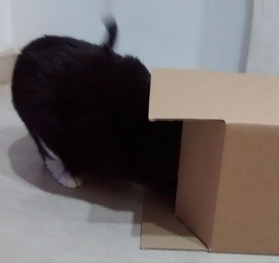 Perro el gato
